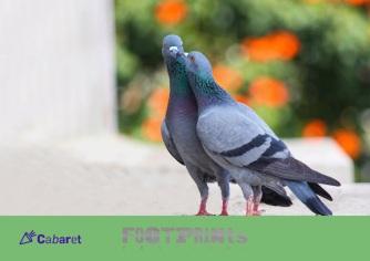 3-Tom-Lehrer-show-image-WEBSITECABARET-1-1024x724